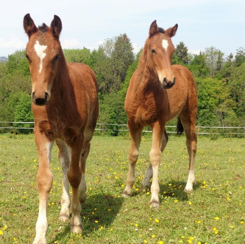 MAI-JUIN les animaux au printemps : vos plus belles photos Dsc02213