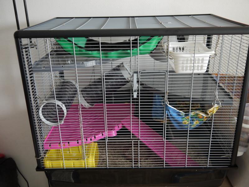 Photos de vos cages - Page 6 P1080520