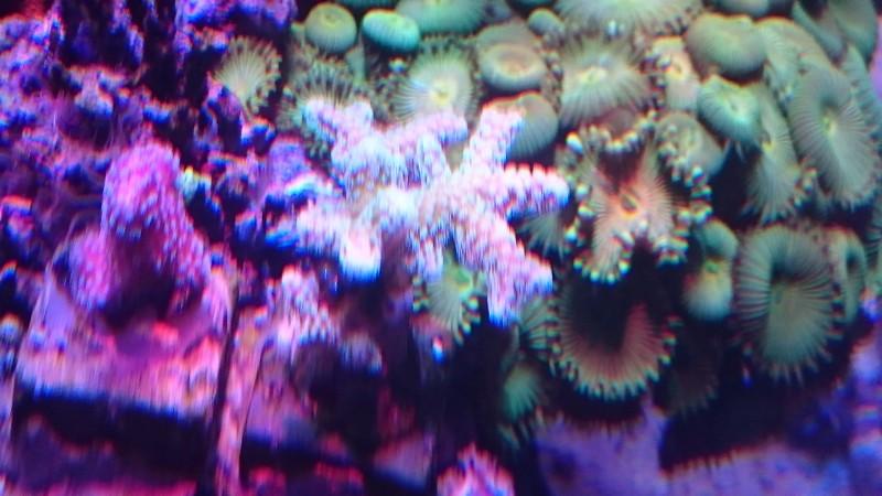 reef cube by hotmars  Dsc_0016