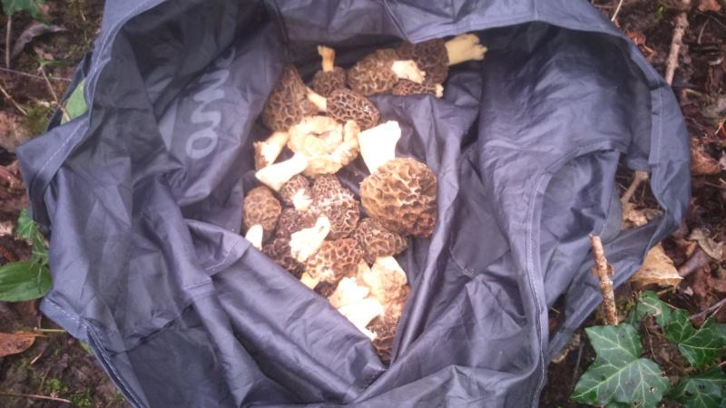 Les champignons , ( girolles , cèpes , morilles ) etc ...  - Page 41 Dsc_0110