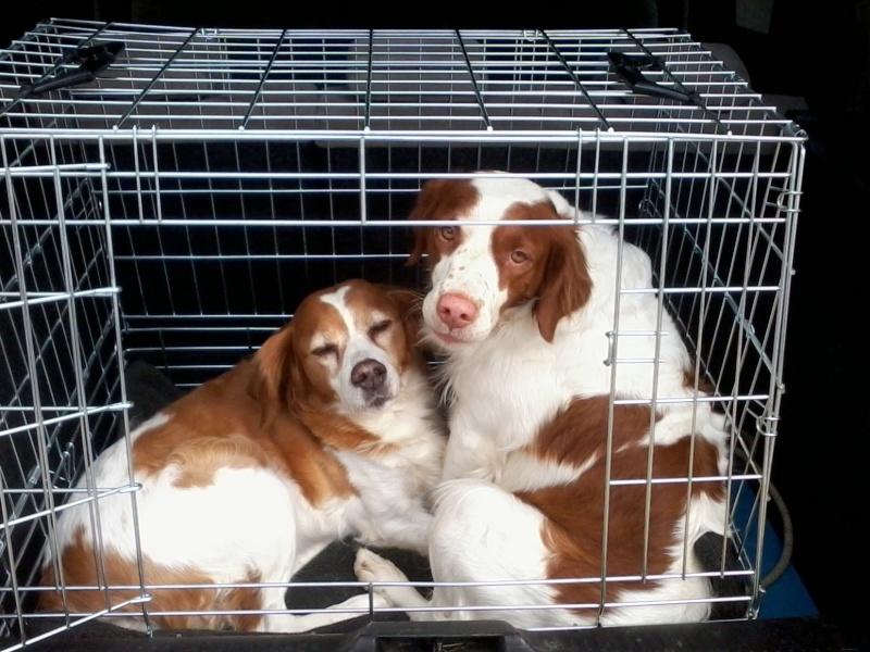cage de transport pour chien  Fotf4110