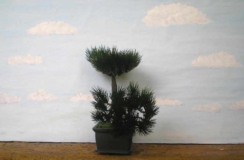 Preiswertes Material zur Pflanzengestaltung 70_mm_14