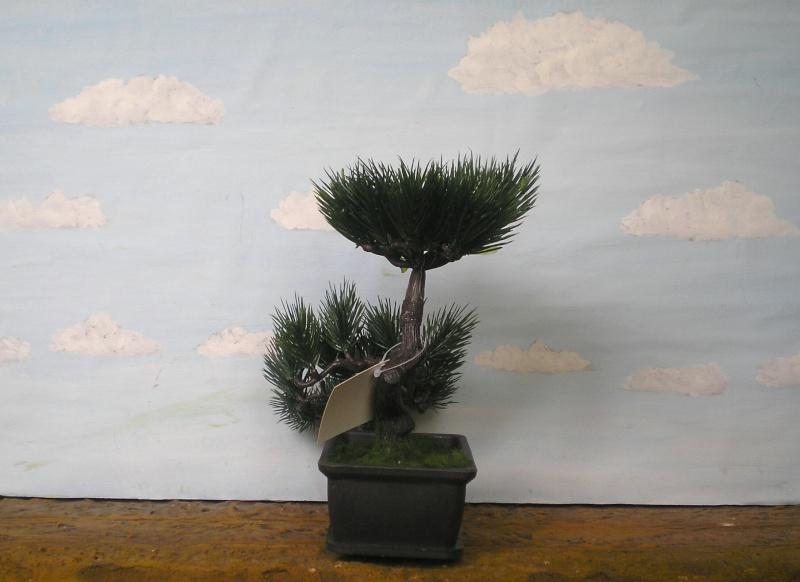 Preiswertes Material zur Pflanzengestaltung 70_mm_17
