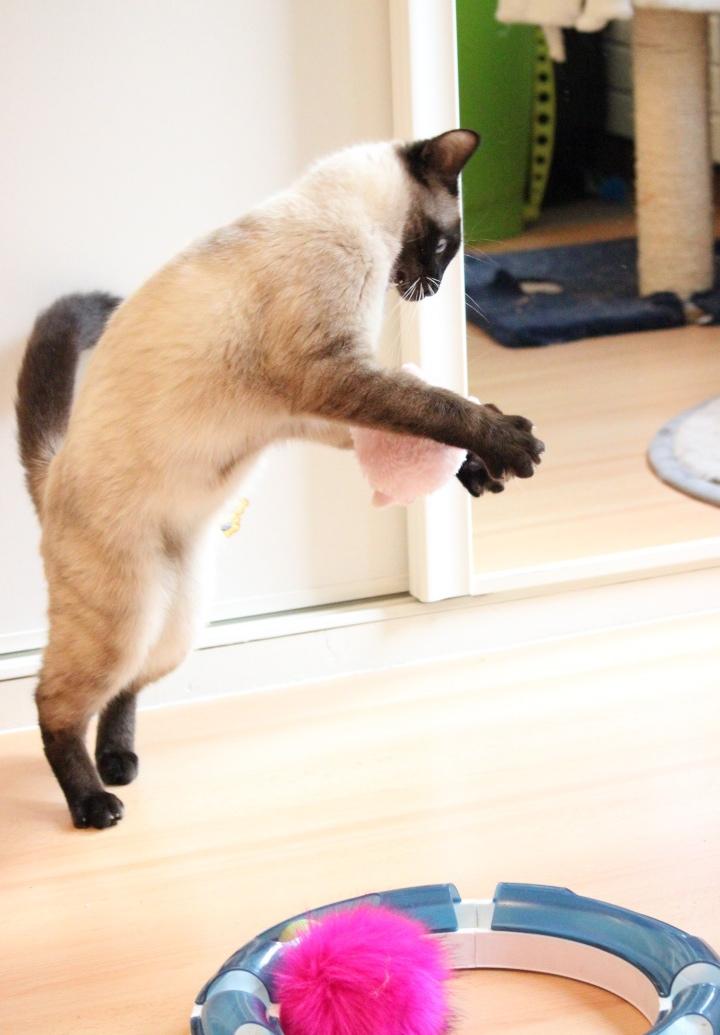 Photos des chats sauvés, avant/après - Page 9 Img_4611