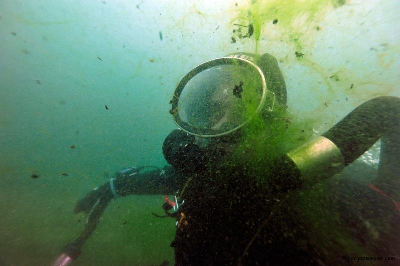 l'invasion des crevettes tueuses a commencé....dans le Léman ! _dsc9118