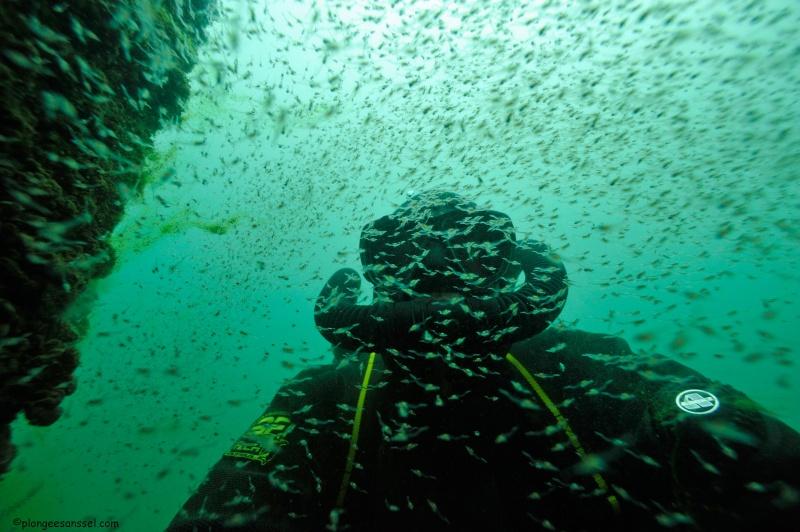 l'invasion des crevettes tueuses a commencé....dans le Léman ! _dsc9210