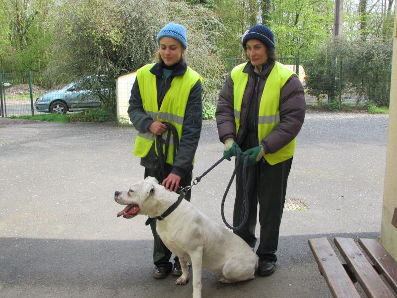KAYA Femelle DOG ARGENTIN - Page 2 01014