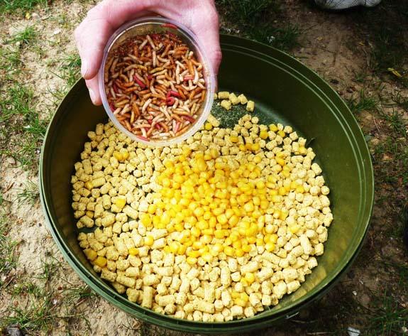 Pellet vs Baby corn P1020911