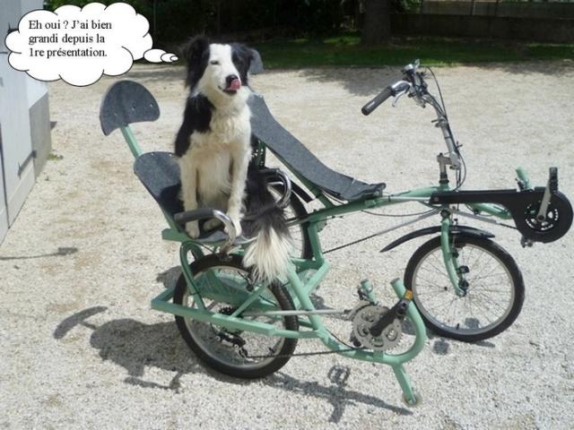 Le side-car pour vélocouché Image210