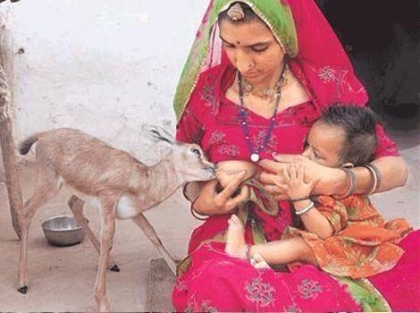 LES BISHNOÏS, union entre l'homme, l'animal et la nature Image128