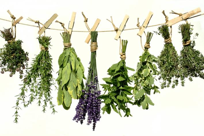 Plantes médicinales que vous pouvez faire pousser chez vous Image136