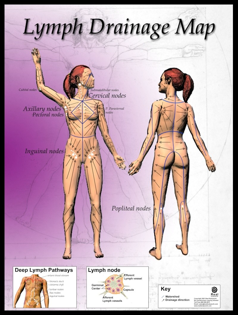 Le brossage à sec de la peau pour faciliter l'élimination Image14