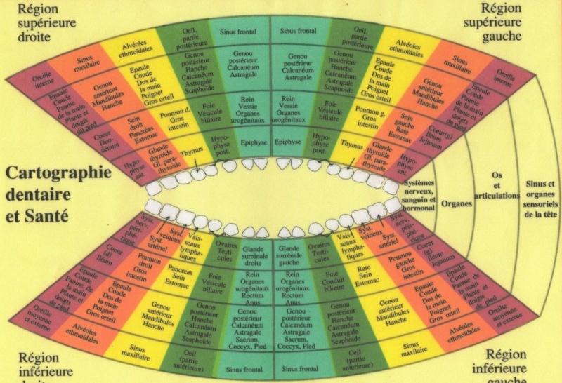 Iridologie et science des correspondances Image143