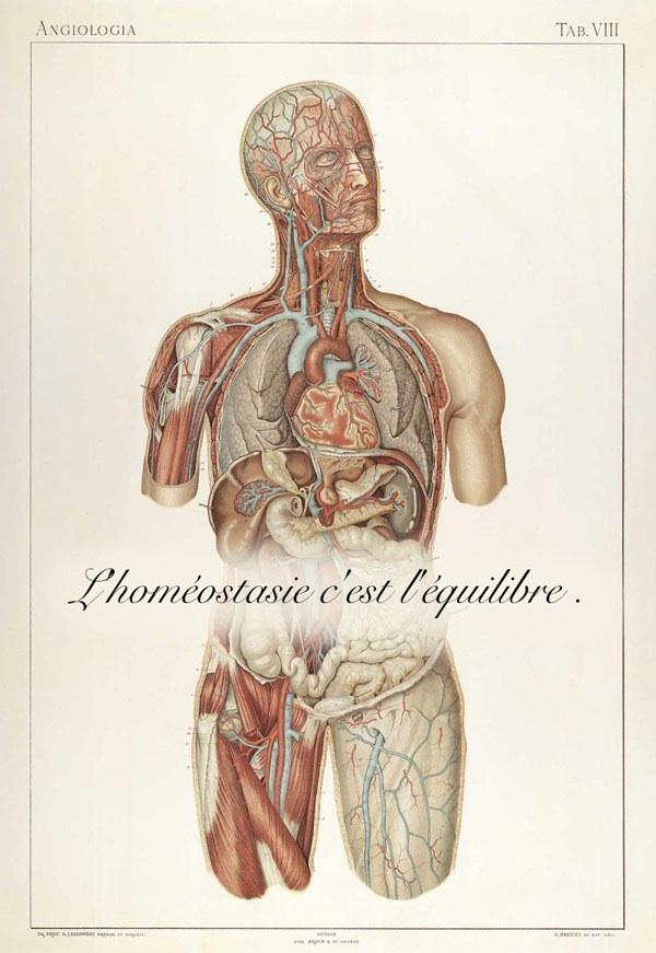 L'Homéostasie ( Ou comment notre corps se guéri tout seul) Image193
