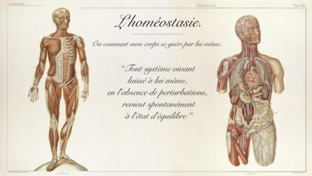 L'Homéostasie ( Ou comment notre corps se guéri tout seul) Image194