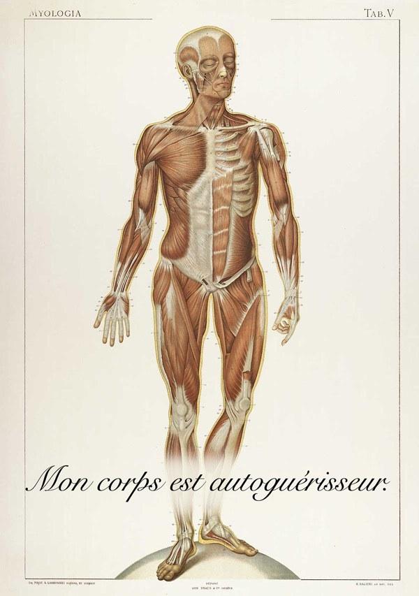 L'Homéostasie ( Ou comment notre corps se guéri tout seul) Image196