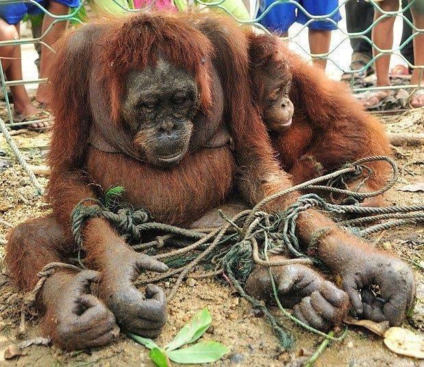 Boycottons l'huile de palme! Image214