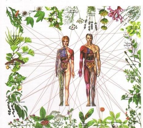 Les plantes pour guérir et dynamiser les chakras Image237
