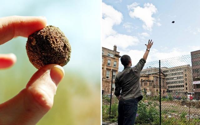 Comment fabriquer des bombes de graines pour revégétaliser nos villes Image266