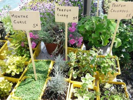 Herbes aromatiques au goût d'huitre, de fromage, de saucisson.. Image269