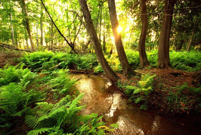 Marcher dans la forêt pour se soigner Image27