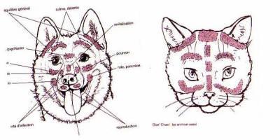 La reflexologie pour les animaux Image39