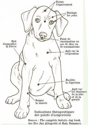 La reflexologie pour les animaux Image40
