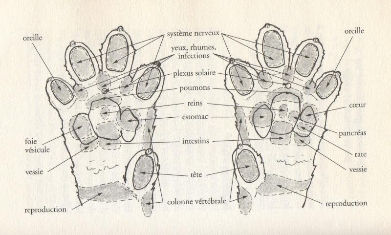 La reflexologie pour les animaux Image41