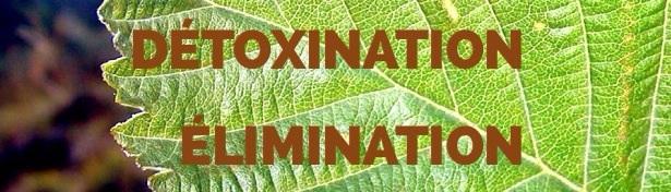 Détoxination et Élimination Image49