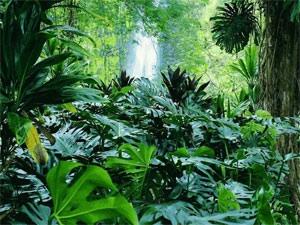 Les plantes ont cinq sens Image52