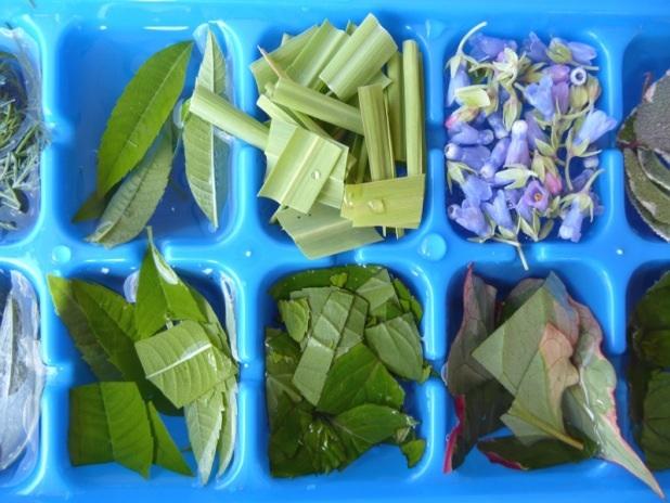 Glaçons aux herbes aromatiques Image53