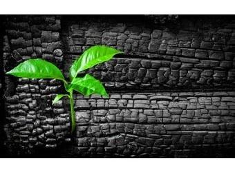 Le charbon végétal activé Image54
