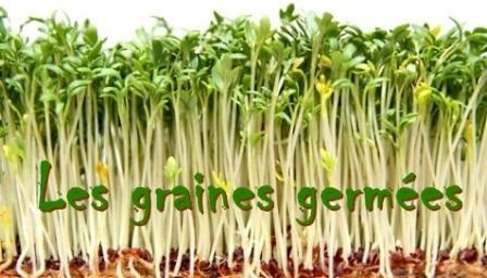 Les graines germées Image58