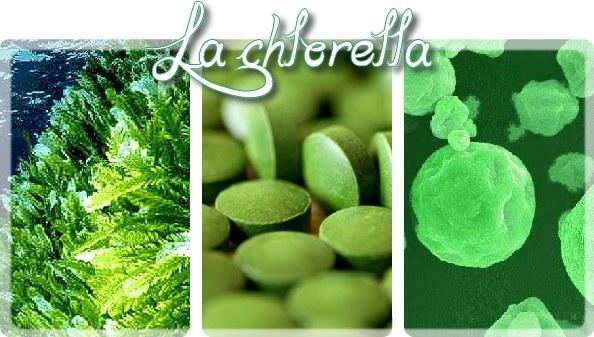 La chlorella Image86
