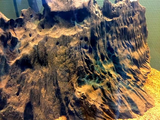 Reprise de l'aquariophilie, projet bac amazonien 200L  Image110