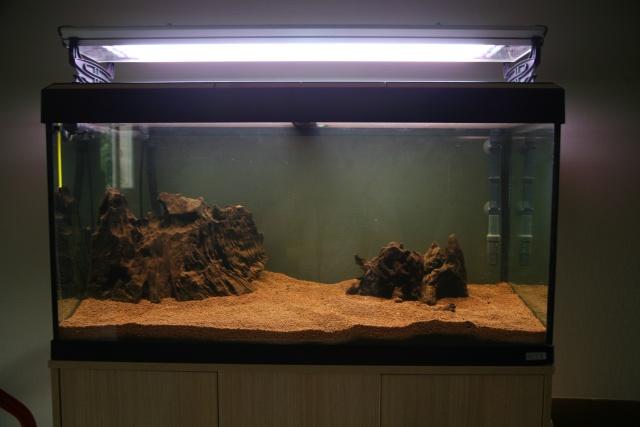 Reprise de l'aquariophilie, projet bac amazonien 200L  Img_5010