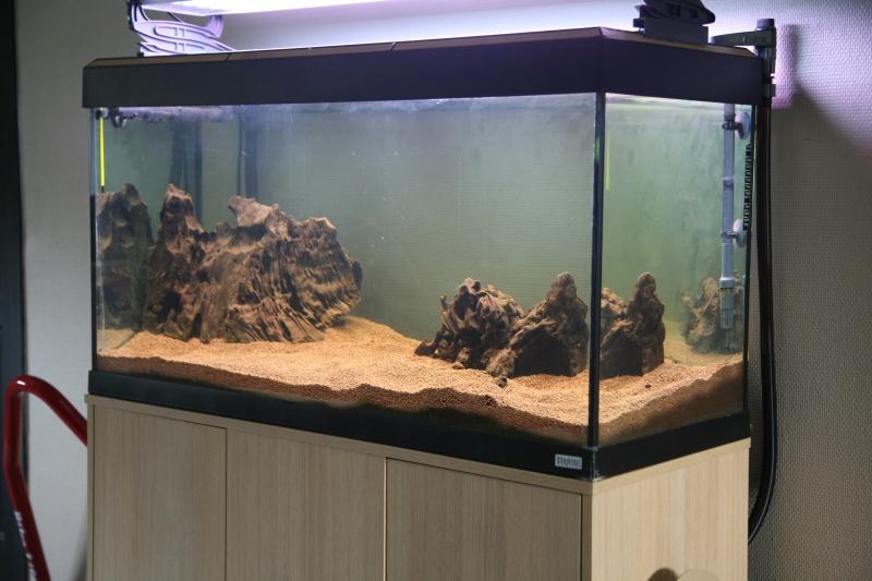 Reprise de l'aquariophilie, projet bac amazonien 200L  Img_5012