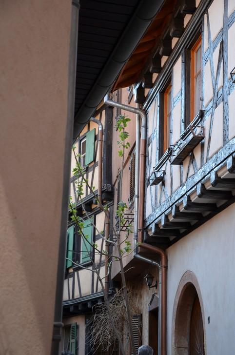 Direction l'Alsace Dsc_0113
