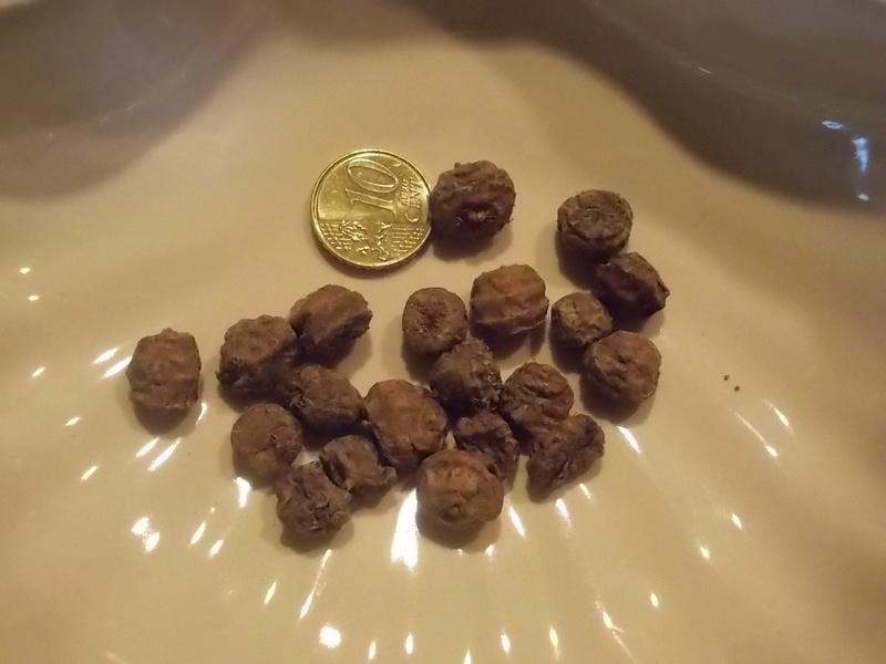 Semer et planter le souchet comestible Dscn9423