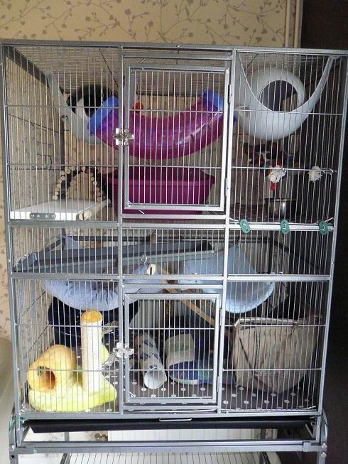 La nouvelle cage pour mes filles P1890821