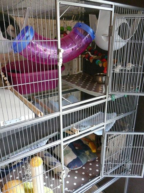 La nouvelle cage pour mes filles P1890910