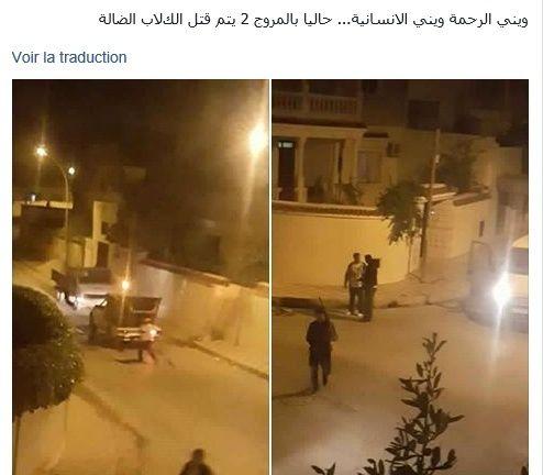 MASSACRES à CIEL OUVERT en Tunisie Fusill10