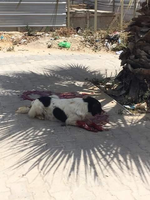 MASSACRES à CIEL OUVERT en Tunisie - Page 2 Lac_210