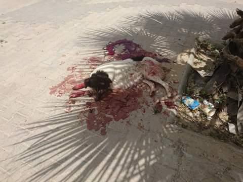 MASSACRES à CIEL OUVERT en Tunisie - Page 2 Lac_2_10