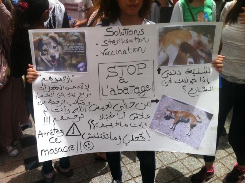 MASSACRES à CIEL OUVERT en Tunisie Manif_49