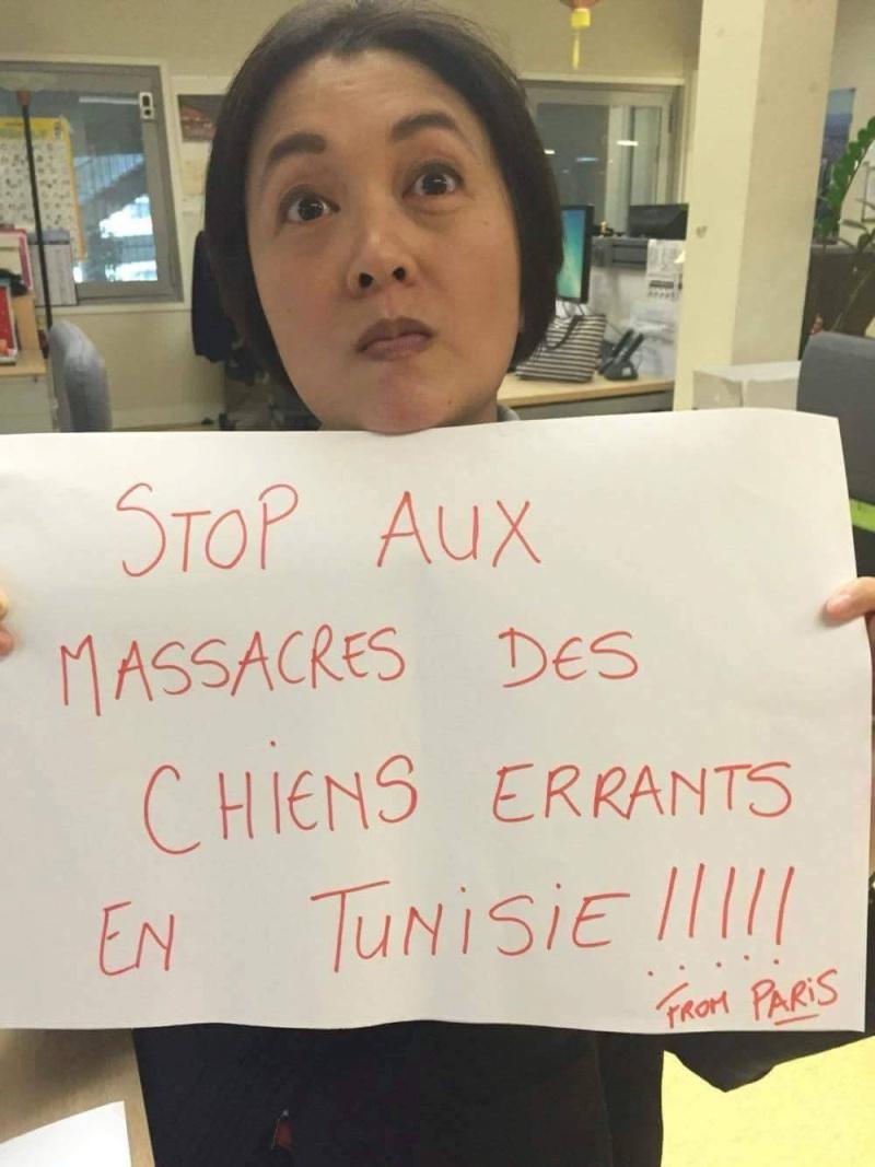 MASSACRES à CIEL OUVERT en Tunisie - Page 2 Stop_a12