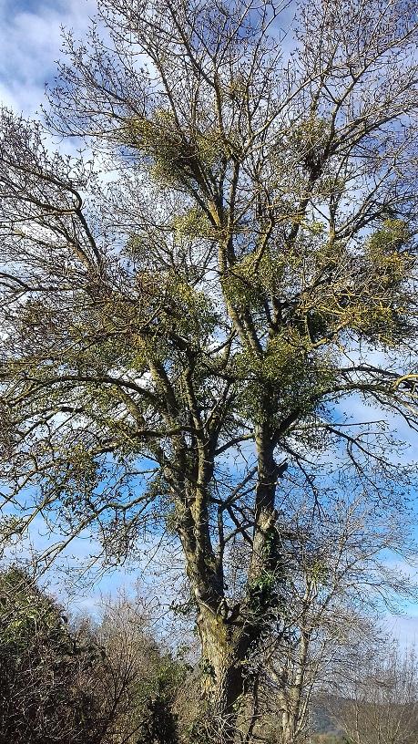 Nos arbres en hiver 2018 20190116