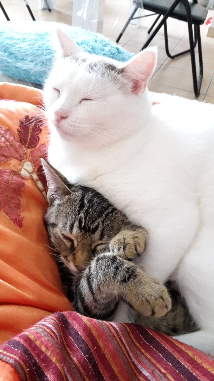 Les chats d'Isa 20151011