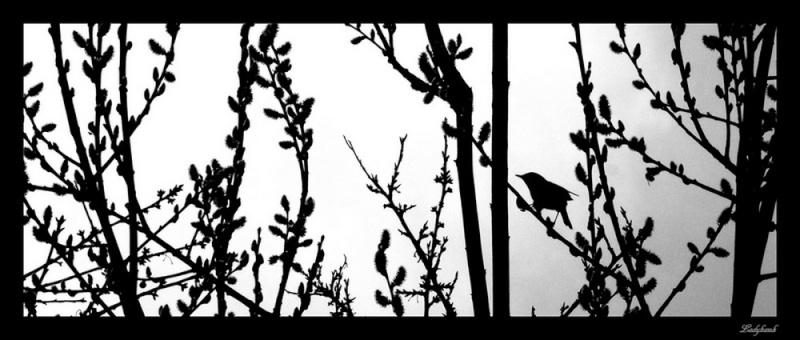les ombres noires Img_1611