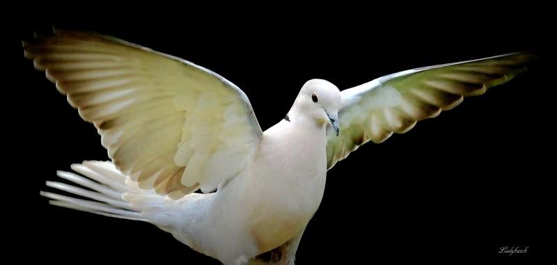 les ailes déployées Img_2511